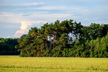 Image of a field with trees an blue sky with clouds in Bavaria, Germany Stock fotó