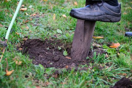 Close-up shovel digs a hole in a meadow to plant tree in Bavaria, Germany Stock fotó