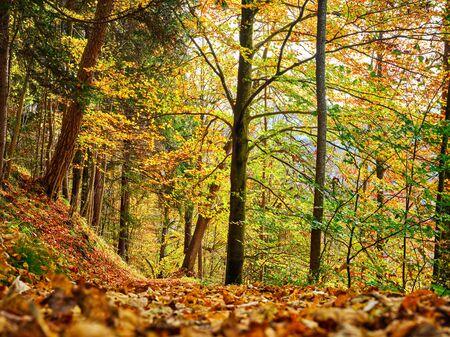 Beautiful colored trees in the woods around Garmisch-Partenkirchen in Bavaria, Germany in autumn. Stock fotó
