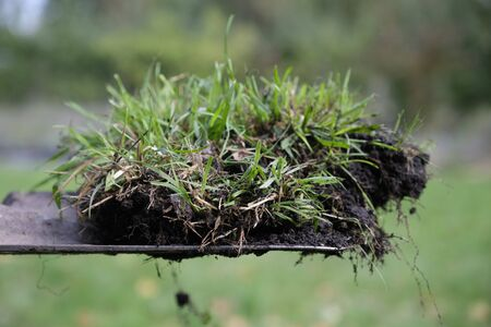 Close-up scoop with grass and earth on it Banque d'images - 134798307