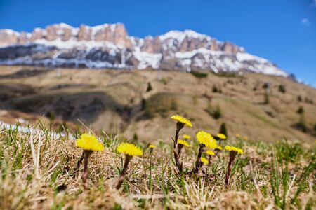 Image of mountains and rocks in South Tirol Italy in summer Stock fotó