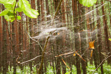 A spider web in the woods.