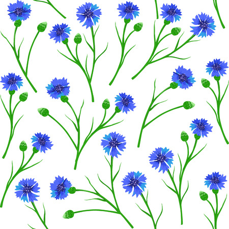 cornflowers: Seamless pattern with blue cornflowers. Vector Illustration Stock Photo