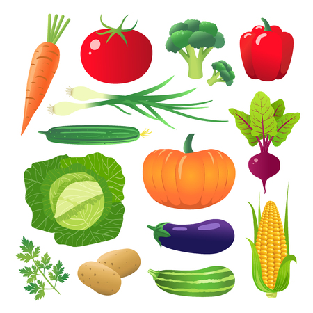 Set of vegetables. Vegetarian food. Isolated on white background. Vector illustration