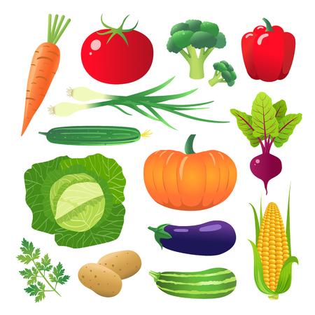 Set of vegetables. Vegetarian food. Isolated on white background. Vector illustration