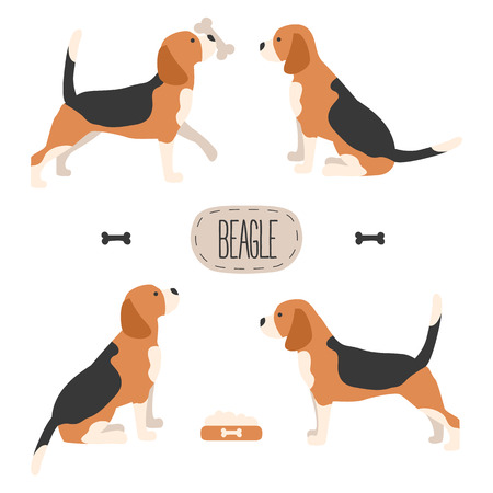 Set of dog beagle illustration Фото со стока - 86209733