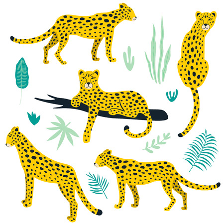 Set of leopards and tropical leaves.Vector illustration