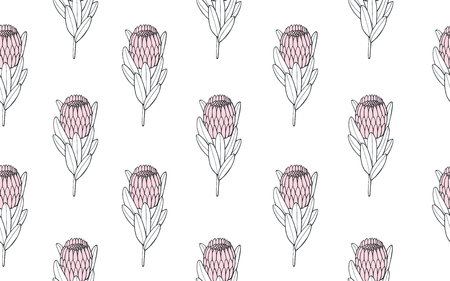 Tropical seamless pattern with exotic protea. Hand drawn vector illustration Stock Photo