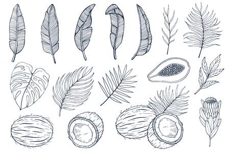 Con hojas de palmera y frutas exóticas papayas, cocos y flores exóticas, hojas de plátano. Ilustración de vector dibujado a mano