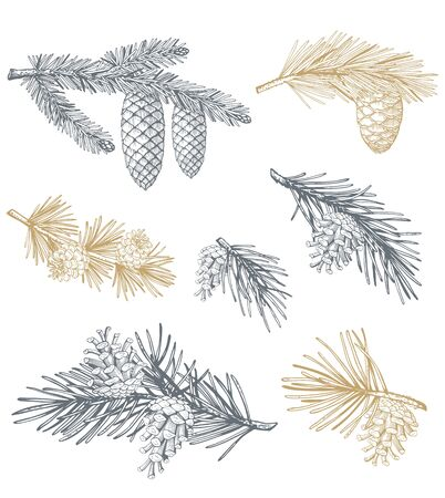 Hand drawn set with pine cones and branches. Vector