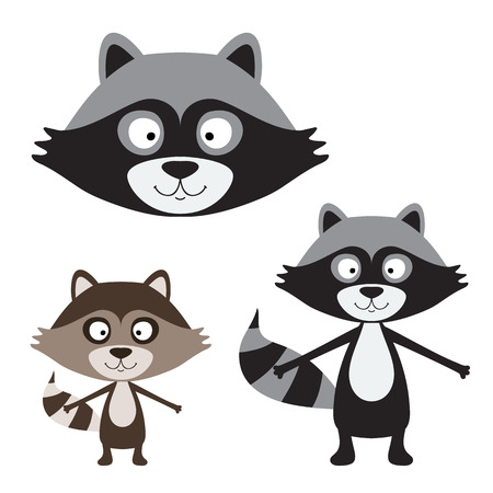 racoon: Cute raccoon isolated on white. vector illustration Illustration