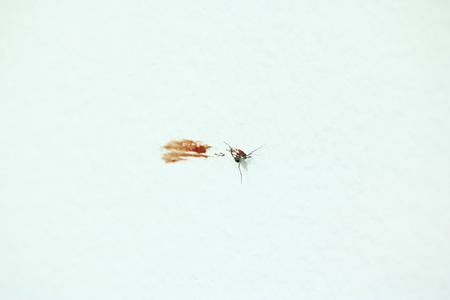 Mosquito carcasses and blood on the wall.