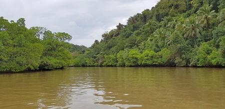 Mangrove Forest, Mangrove Swamp