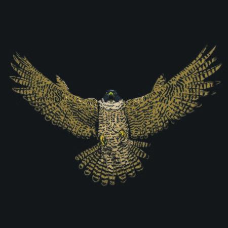 eagle vector art Stock Illustratie