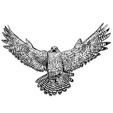 grafika liniowa orła Ilustracje wektorowe