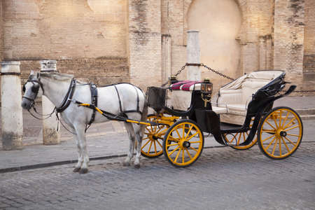 harness: Traditional horse and carriage in front of Cathedral Santa Mar'a de la Sede in Sevilla, Andalusia, Spain.