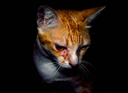 Lonliness cat Stock Photo