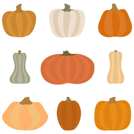 Pumpkin set. Different shapes and sizes gourd. Vector illustration. Isolated on white background.