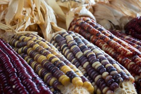 indian thanksgiving: Indian Corn