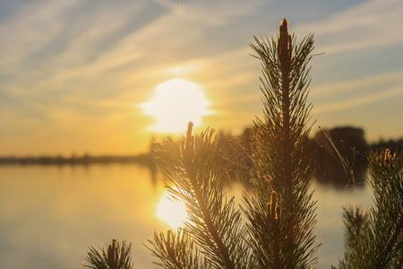 unedited: Spiderweb on the pine tree branch on Valdai lake Stock Photo