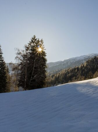 A snow-covered tree with the sun in the picture on a freezing, sunny winter day in the swiss alps