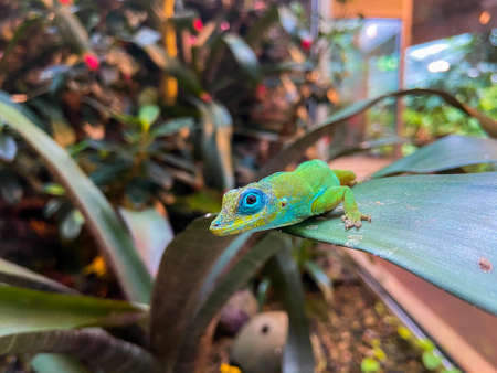 Seaming lizard sits on a leaf