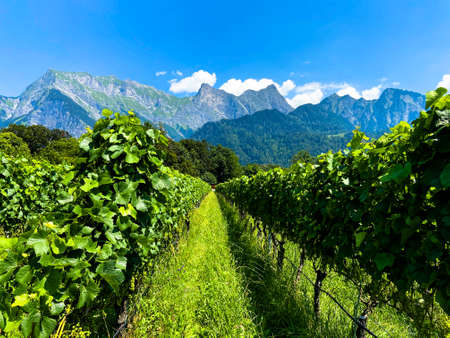 A winery in front of an alpine massif in Maienfeld on a sunny day Stockfoto