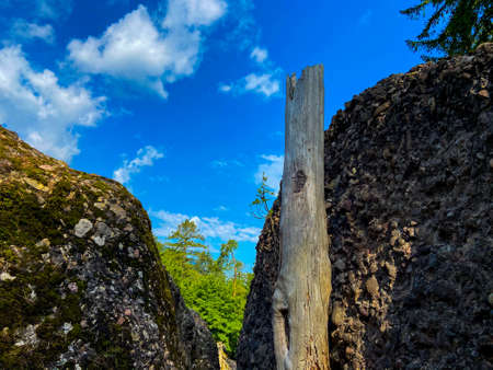 Rotten tree trunk stands on a stone. Photographed on a beautiful summer morning Stockfoto