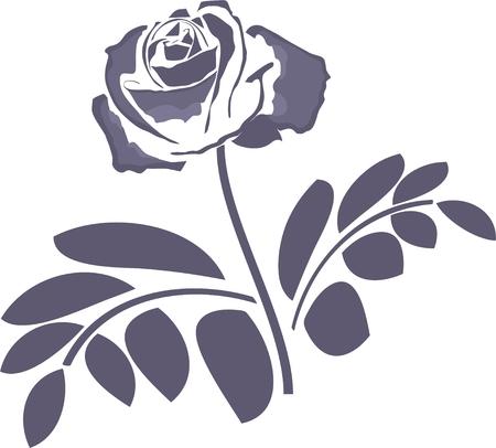rose bud: blue rose Illustration