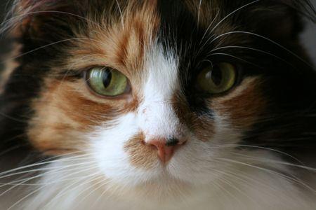 calico cat: Happy Calico Cat