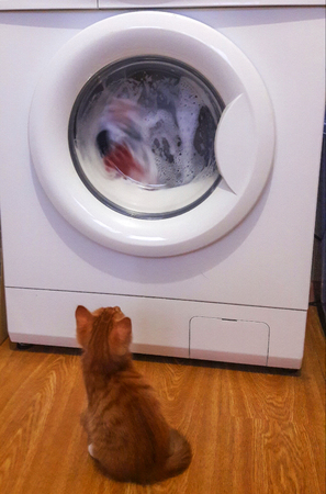 Photo of the washing machine and red katonok watching how things are washed Stockfoto