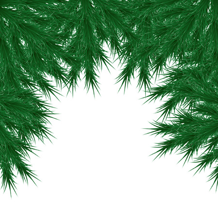 Vector image, Christmas tree branches on a white background, with white tips, lush Christmas tree needles