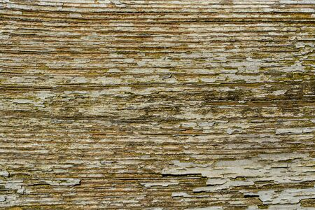 Wooden background with peeling stripes, gray, weathered with time tree Stockfoto