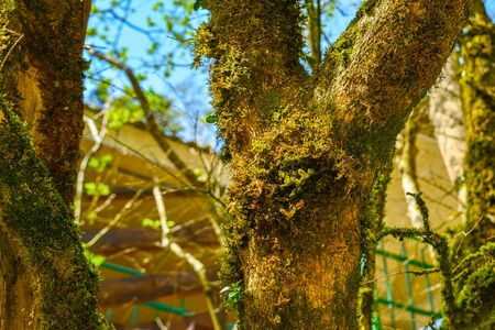 Tree overgrown with moss, close-up against a blue sky