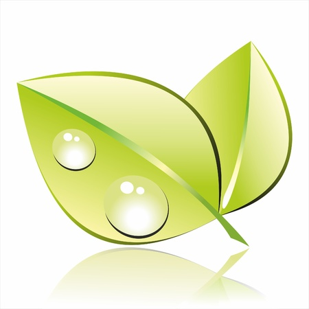 leaf water drop: green leaf with water drop  on white background  water on white background  Illustration