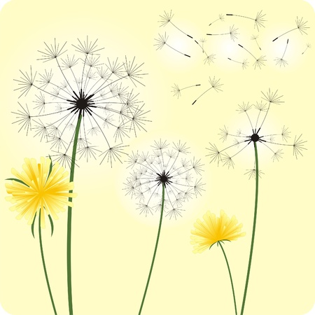 The gentle dandelions in the wind .Vector illustration.