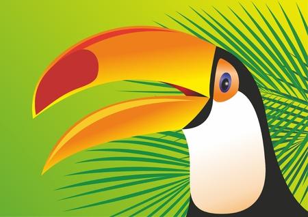 Keel Billed Toucan Vector