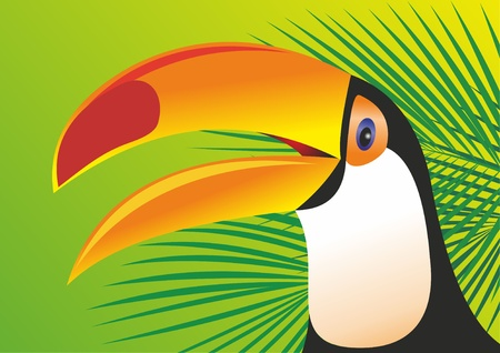 central park: Keel Billed Toucan Illustration