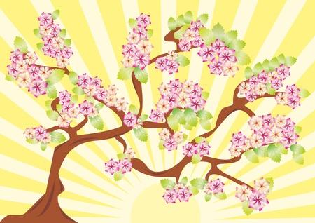 Spring card with sakura. vector illustration  Vector