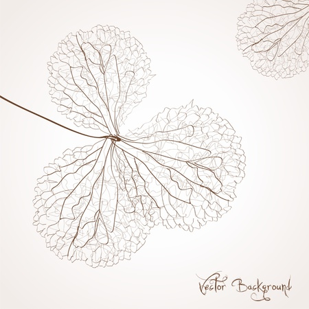 delicate: vector flower background