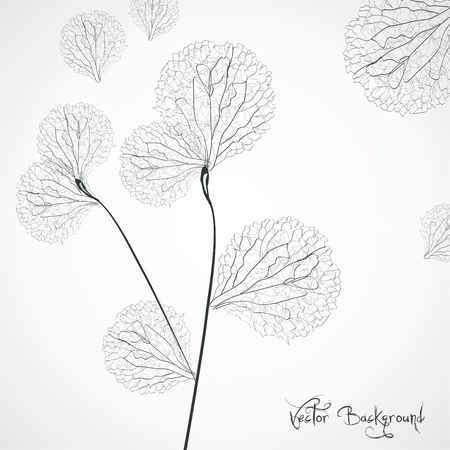 dandelion abstract: vector flower background