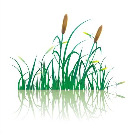 canne: Primo piano di zucchero piantagione di canna Vettoriali