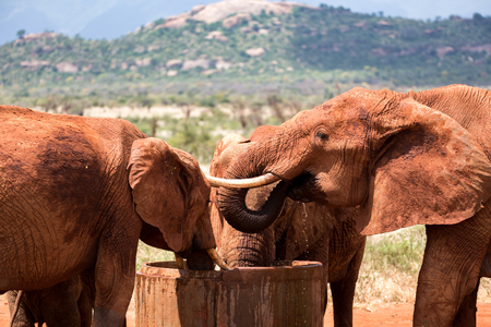 Some elephants drink water from a water tank Imagens