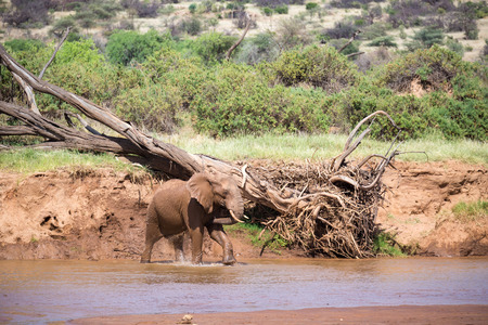 An elephant familiy on the banks of a river in the middle of the National Park