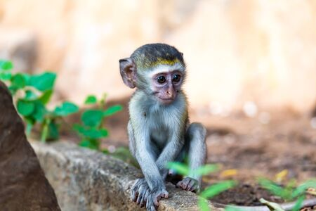 One little monkey sits and looks very curious