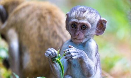 One little funny monkey is playing on the floor or on the tree Stock Photo