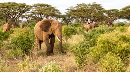 A lot of elephants go through the bushes in a jungle