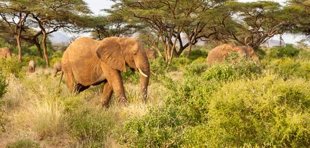 Some elephants walk through the jungle amidst a lot of bushes