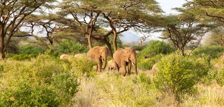Some elephants walk through the jungle amidst a lot of bushes Stockfoto - 132330306
