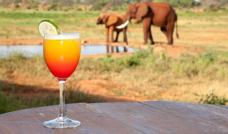 One orange cocktail with elephants in the background Stock fotó